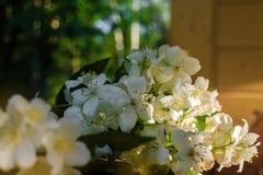 与绿色叶子的白色茉莉花花在绿色树背景的轻的木桌上与在边的一束光束 r 库存图片