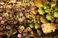 与绿色叶子的紫色白花 库存图片