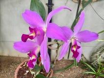 与绿色叶子的紫色花 库存图片