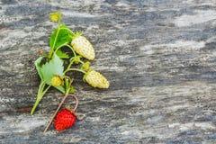与绿色叶子的红色和白色野草莓在与拷贝空间的一张老灰色木桌上 库存照片