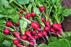 与绿色叶子的红色庭院萝卜 图库摄影