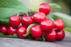 与绿色叶子的红色樱桃莓果分支 成熟果子宏观视图照片 选择聚焦,浅景深 图库摄影