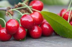 与绿色叶子的红色樱桃莓果分支 成熟果子宏观视图照片 选择聚焦,浅景深 免版税图库摄影