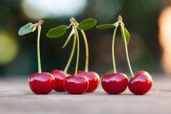 与绿色叶子的红色樱桃莓果 成熟果子宏观视图照片 选择聚焦,浅景深 美丽 免版税库存图片