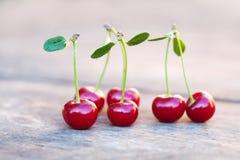 与绿色叶子的红色樱桃莓果 成熟果子宏观视图照片 选择聚焦,浅景深 美丽 图库摄影
