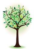 与绿色叶子的结构树。 春天结构树。 夏天结构树 库存图片