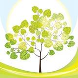 与绿色叶子的结构树,晴天 图库摄影