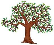 与绿色叶子的结构树 库存照片