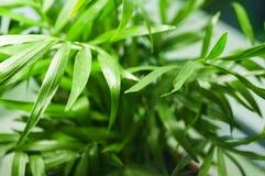 与绿色叶子的绿色植物背景 库存照片
