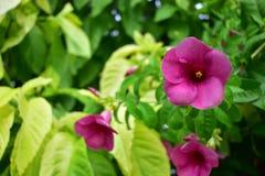 与绿色叶子的美丽的紫色花 免版税库存图片
