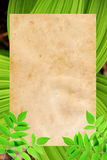 与绿色叶子的老纸背景 免版税库存图片