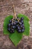 与绿色叶子的葡萄 免版税图库摄影