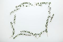 与绿色叶子的词根 免版税库存照片