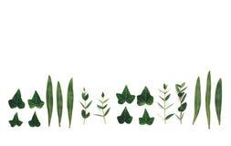 与绿色叶子的边界 免版税库存图片