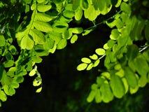 与绿色叶子装饰背景纹理的宏观照片  库存图片