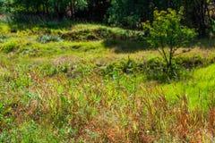 与绿色和橙色植被和一棵年轻树的一个明亮的夏天风景 免版税图库摄影