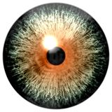 与绿色和橙色颜色的动物3d眼珠 库存例证