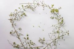 与绿色干燥叶子的样式纹理在白色背景跳跃 平的位置,顶视图最小的概念 免版税库存照片