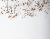 与绿色干燥叶子的样式纹理在白色背景跳跃 平的位置,顶视图最小的概念 免版税库存图片