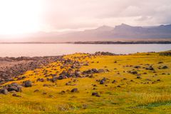 与绿色平原和岩石海岸的火山的风景在Snaefellsnes半岛,冰岛 库存照片