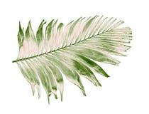 与绿色棕榈叶的概念夏天从热带 花卉叶状体 库存图片