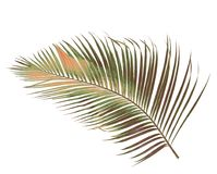 与绿色棕榈叶的概念夏天从热带 花卉叶状体 图库摄影