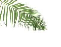 与绿色棕榈叶的概念夏天从热带 花卉叶状体 免版税库存照片