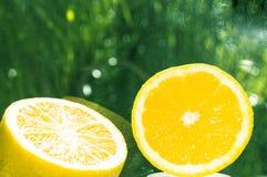 与绿色森林bokeh的桔子 库存照片