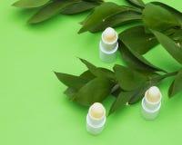 与绿色植物分支的唇膏 免版税库存照片