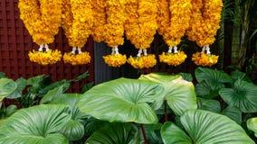 与绿色植物的祈祷的花 库存图片