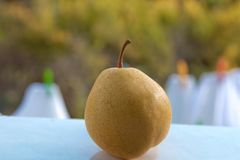 与绿色植被的黄色梨在背景中 在绿色背景隔绝的梨 免版税库存照片