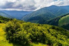 与绿色灌木和针叶树的一个巨大数目的一个宽山谷在多云中没有 库存照片