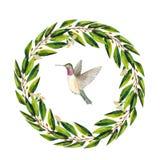 与绿色玉树叶子和蜂鸟的水彩手画花圈 皇族释放例证