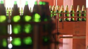 与绿色玻璃瓶的自动化的生产线 啤酒在工厂的包装线 股票视频