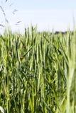与绿色的农业领域 免版税库存照片