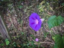与绿色的紫色花在自然离开 免版税图库摄影