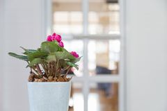 与绿色的美丽的桃红色花在一个白色陶瓷罐w离开 免版税库存照片