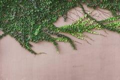 与绿色花卉光芒的抽象背景 库存照片