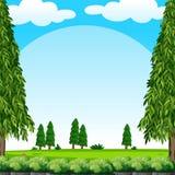 与绿色草坪和杉树的场面 向量例证