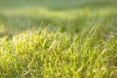 与绿色草坪的美好的背景在与浅景深的一个晴天 特写镜头 复制空间 库存图片