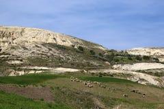 与绿色草甸和小山的农村风景 免版税库存照片