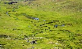 与绿色草甸的风景 免版税图库摄影