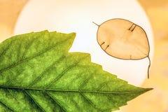与绿色装饰叶子特写镜头的自然抽象背景在背后照明 库存图片