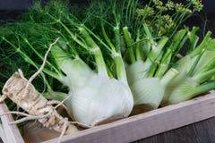 与绿色词根的未加工的茴香电灯泡和叶子、准备好的黑种草和的根烹调 库存照片