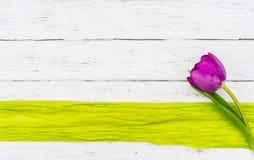 与绿色边界的一朵紫色郁金香花在与拷贝空间的白色木头 免版税库存照片