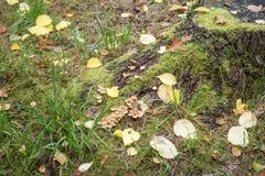 与绿色青苔和蘑菇的树桩在秋天 免版税图库摄影
