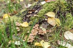 与绿色青苔和蘑菇的树桩在秋天 免版税库存照片