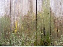 与绿色青苔或模子,相当土气背景的老木背景 库存照片