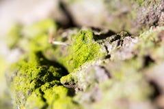 与绿色青苔的抽象构成在树皮 免版税库存图片
