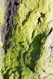 与绿色青苔的抽象构成在树皮 免版税图库摄影